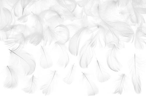 Piórka dekoracyjne białe - 50 szt.
