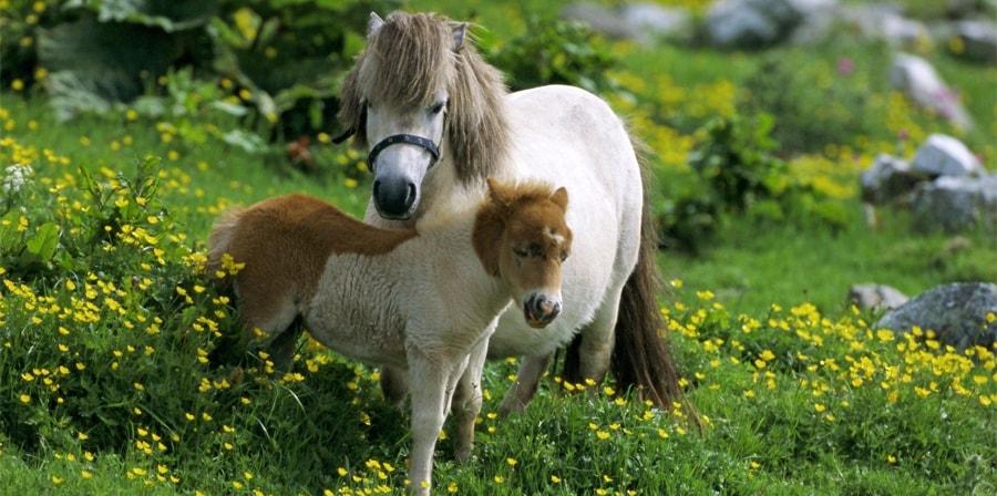 Przyjęcie konie